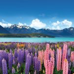 NZ Estate Agent Offers Vendors TV Adverts as Part of Property Marketing Package
